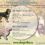 Elza z Kraje vlka x Brit Coras Garden – plánovaný vrh G